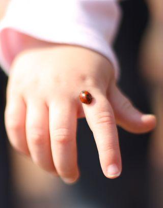 Ladybugfinger